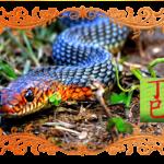 Фэн-шуй на май 2018 Месяц Огненной Змеи