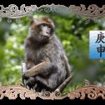 август 2018 обезьяна