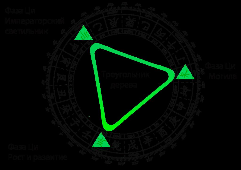 Фазы-ци-треугольник-дерева-min